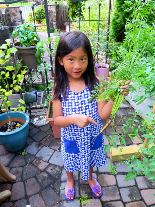 Addie harvesting carrots