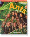 Ants (A Denver Museum of Nature & Science Book)