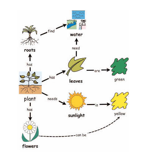 Concept Map About Plants