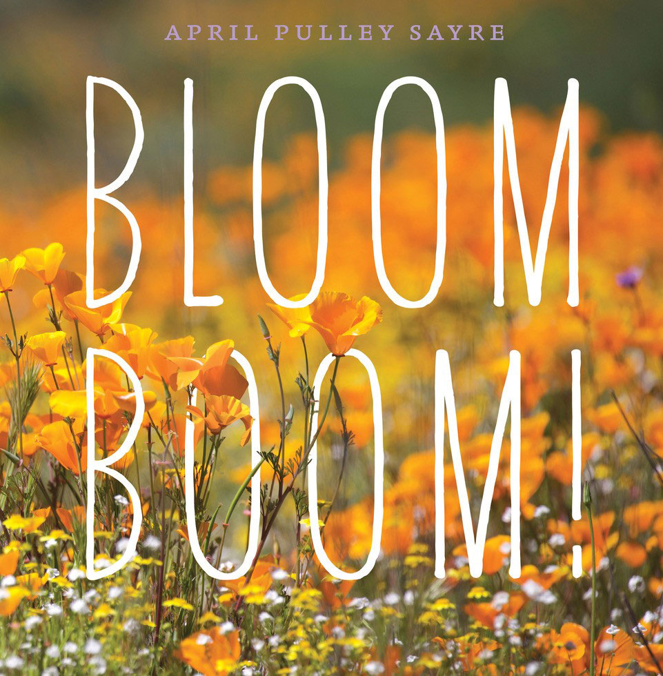 Bloom Boom book cover