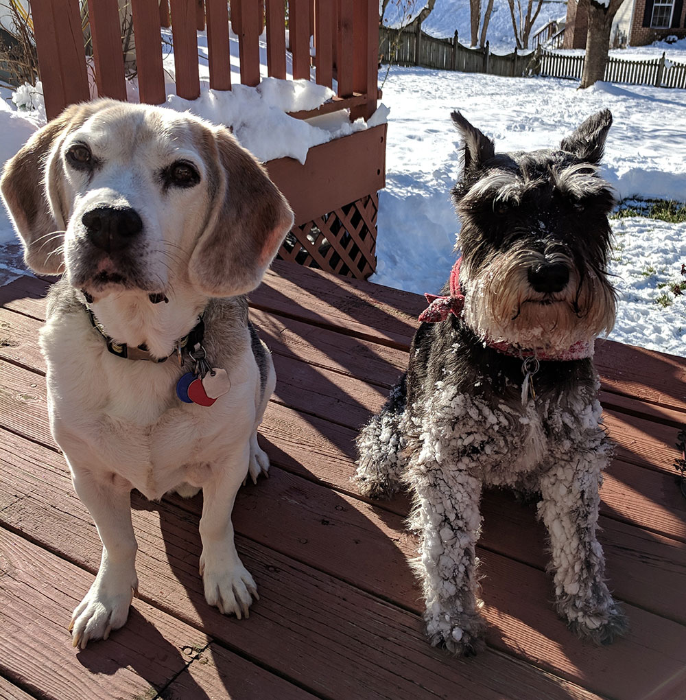 Two dogs who are best friends together on the back porch