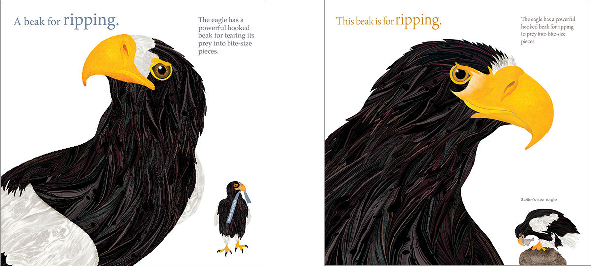 Two illustrations of the heads of Bald Eagles from The Beak Book